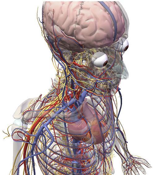 Human Body Anatomy Animation Human Body Anatomy Animation Geoface