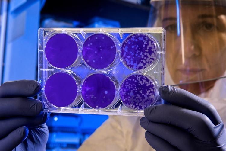 covid-19 pandemic, covid-19, coronavirus
